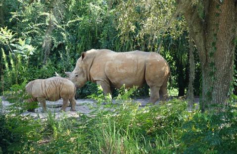 1.1434393887.rhinos