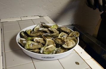 1.1434845718.oysters