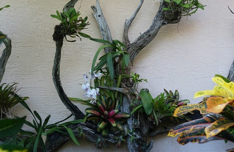 1.1435134348.more-orchids-on-3-pieces-of-driftwood