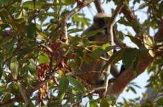 5.1452673167.mr-monkey