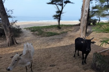 5.1453481672.view-to-talpona-beach-from