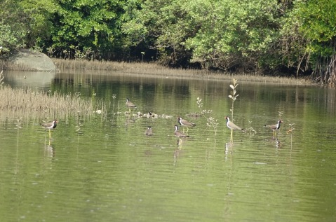5.1454022803.wading-birds