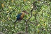 5.1454453298.kingfisher
