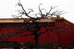 3.1458680489.dragon-claw-tree