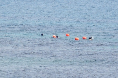 3.1458866212.diving