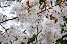 3.1459027436.blossom-in-glover-garden