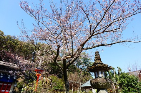 3.1459027436.cherry-blossom-on-the-mountain