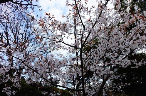 3.1459027436.cherry-trees
