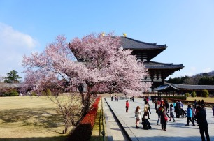 3.1459193119.cherry-blossom-temple