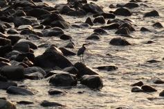5.1457389053.seabird-on-the-rockss
