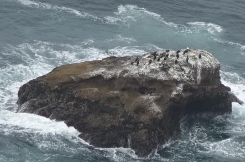 3.1460408176.murees-like-black-and-white-cormorants