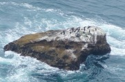 3.1460408176.murees-on-the-rocks