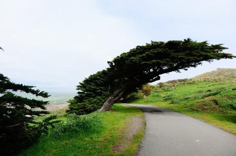 3.1460408176.windswept-trees
